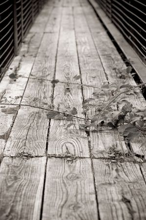 rickety: rickety bridge covered with thorns Stock Photo