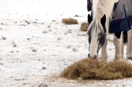 horse feeding on hay in a snow covered paddock photo