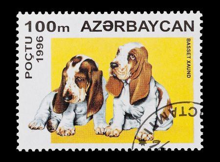sniffer: Azerbaijan stamp featuring basset hound puppies