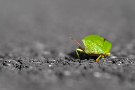 extreme closeup of a shield beetle on asphalt - very shallow d.o.f photo