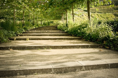 cascade of tree lined pathway steps through a formal garden photo