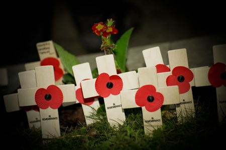 remembrance: flashlight beam illuminating wartime commemorative poppy crosses in a graveyard Stock Photo