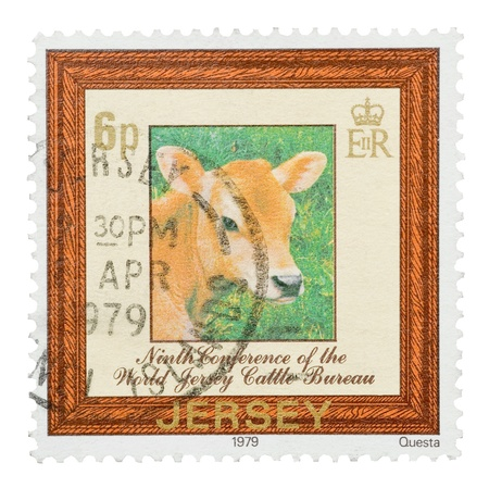 Mail stamp printed in Jersey featuring a cattle calf portrait, circa 1979 Stock Photo - 11988872