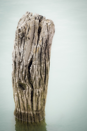 rotting: textured surface of a rotting wooden post in deep water Stock Photo