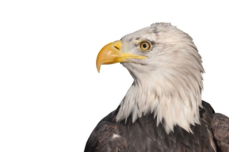 profile: head profile of an american bald eagle isolated on white Stock Photo