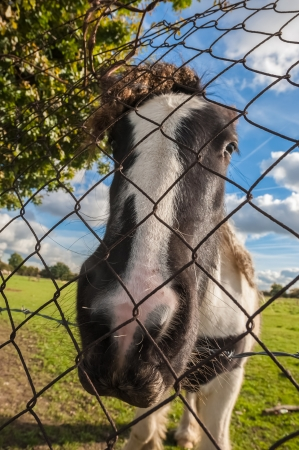 fencing wire: distorted head of a pony behind wire fencing