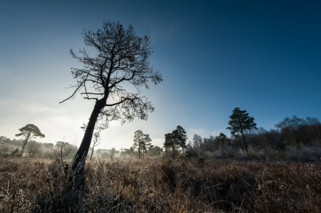 tree silhouette in a wintry landscape photo