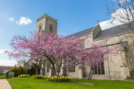 churchyard: blossom tree in the parish churchyard of St Nicholas in Wells-next-the-sea, Norfolk, UK