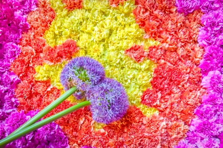 bunched: background of tightly bunched flowers and floral pom-pom drum beaters Stock Photo