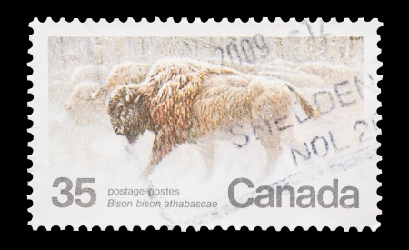 philately: Mail stamp printed in Canada featuring the migration of bison, circa 1981