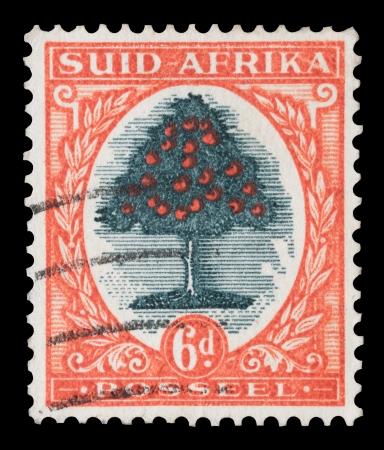 arbre fruitier: Timbre-poste vintage imprim� en Afrique du Sud avec un arbre fruitier orange, circa 1926