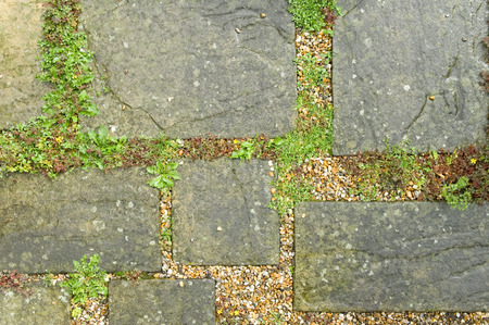 weeds and other vegetation between paving slabs Stock Photo