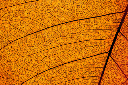 microscopic: color enhanced leaf cell structure abstract Stock Photo