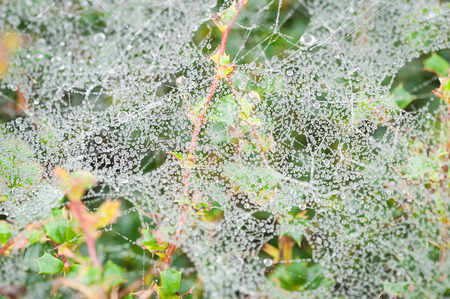 web2: morning dew clinging to a mass of spider webs