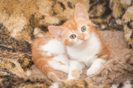 animal angelic: hypnotic look from a beautiful ginger kitten