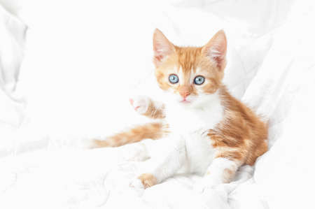 angel cat: hypnotic ginger kitten on a bleached out white background Stock Photo