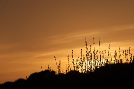 vegetation: golden sun setting over countryside vegetation