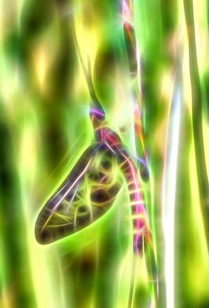 sprite: fairytale sprite computer generated fractal illustration