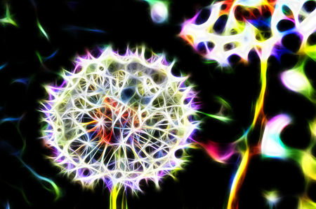 dandelion abstract: dandelion fractal abstract on a black background Stock Photo