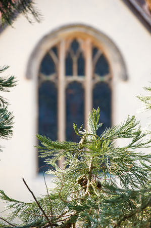 stained glass church: distant stained glass church window through pine tree vegetation