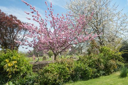 churchyard: rural churchyard trees in colorful springtime blossom Stock Photo