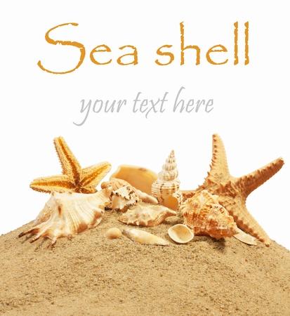 schelp op het strand Stockfoto
