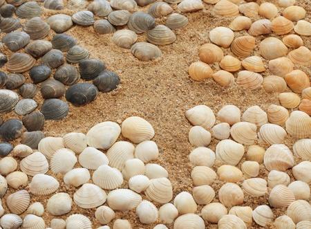 Composizione di conchiglie e stelle marine del mare sulla spiaggia Archivio Fotografico - 10923798