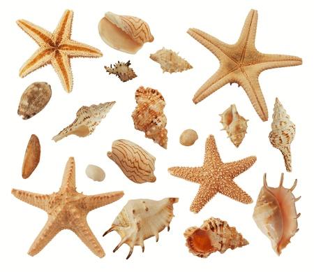 sea shells Banco de Imagens - 10963460