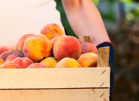 Ripe peaches in a box