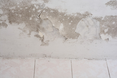 mildewed: Mold in a edge of a room
