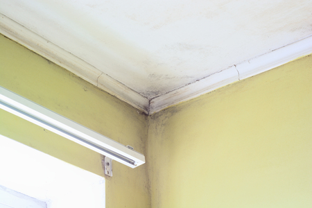 mildew: Mold in a edge of a room