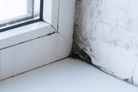 Mold in the corner of the window .