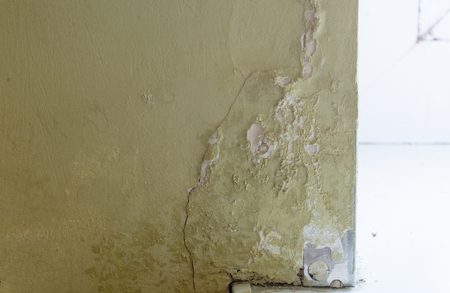 spores:  mold in the old room wall .