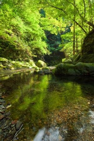riverine: Kawahara in the woods of Okutama