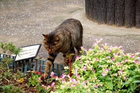 sneak: Sneak in flower beds off-limits, Doraneko of villain face Stock Photo