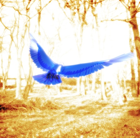 living organism: Blue bird flying in the forest Stock Photo