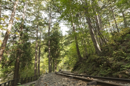 forest railway: Forest railway and forest of cypress