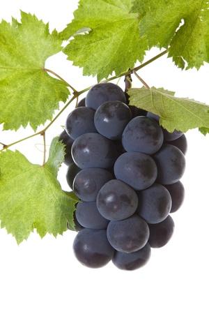 ripen: grapes ripen