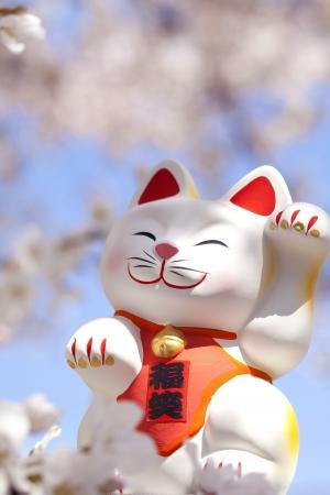 se�al de silencio: Tentando el gato para que su visi�n de la flor