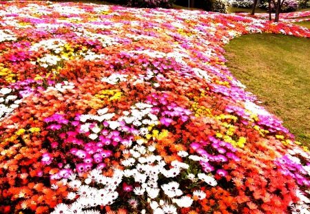 riverine: River of Flowers