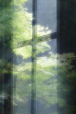 grates: Window of the fresh green