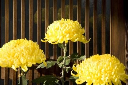 grates: Chrysanthemum