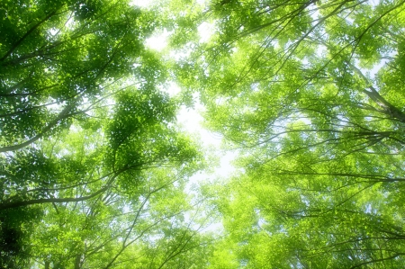 bgm: Forest of verdure Stock Photo