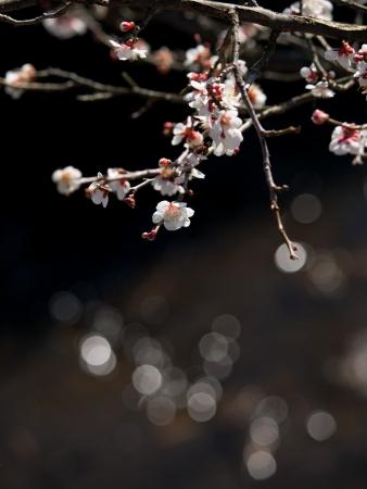 waterside: Plum and waterside ball blur
