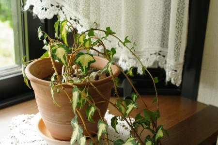houseplant: Houseplant windowsill