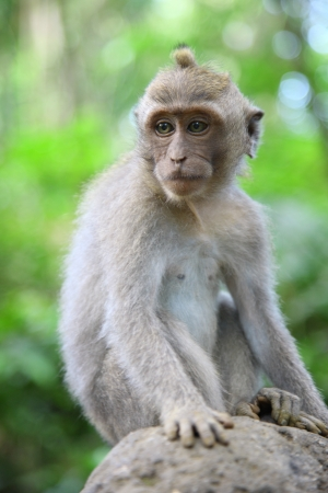 contemplated: Monkeys during a break