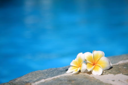 waterside: Plumeria waterside