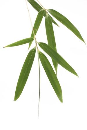 feuille de bambou: Feuilles de bambou Banque d'images