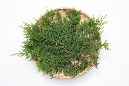 colander: The colander Full juniperum