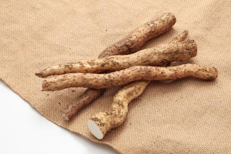wild yam: Wild yam of soil with